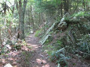 Appalachian Trail near Watauga Lake