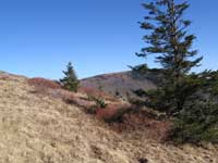 Roan Mountain Round Bald Jane Bald